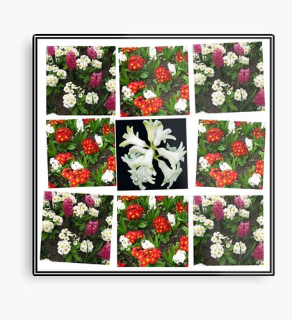 Hyacinths and Primroses Spring Collage Metallbild