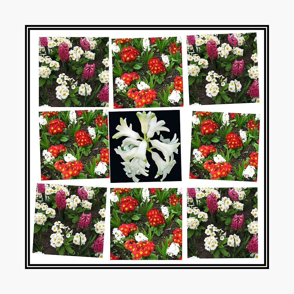Hyacinths and Primroses Spring Collage Fotodruck