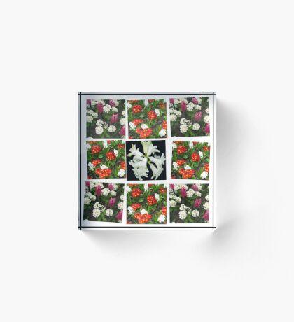 Hyacinths and Primroses Spring Collage Acrylblock