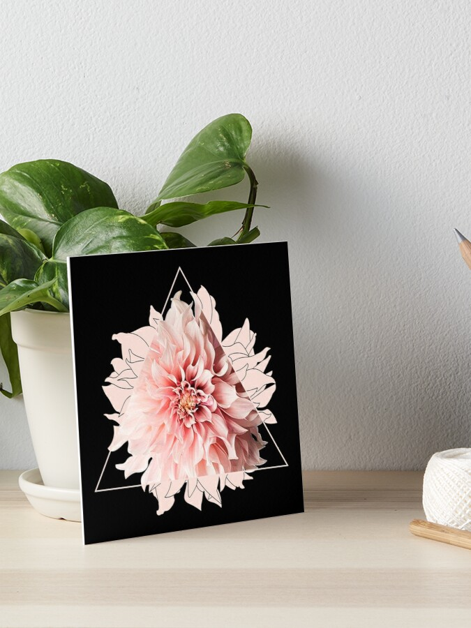 3857790e895a Lámina rígida «Triángulo rosado de la flor de la dalia» de ...