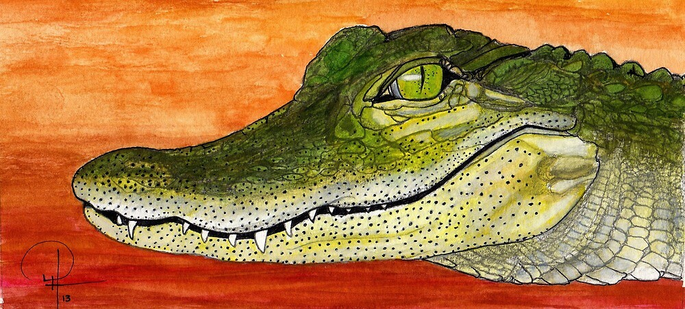 Anahuac Alligator by Doug Hiser