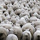Sheepies by Kimberly Palmer