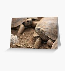 Baby Giants Greeting Card