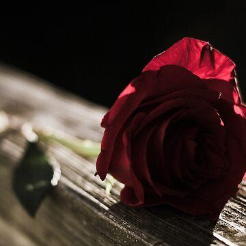 Dark Rose by razzmatazzy