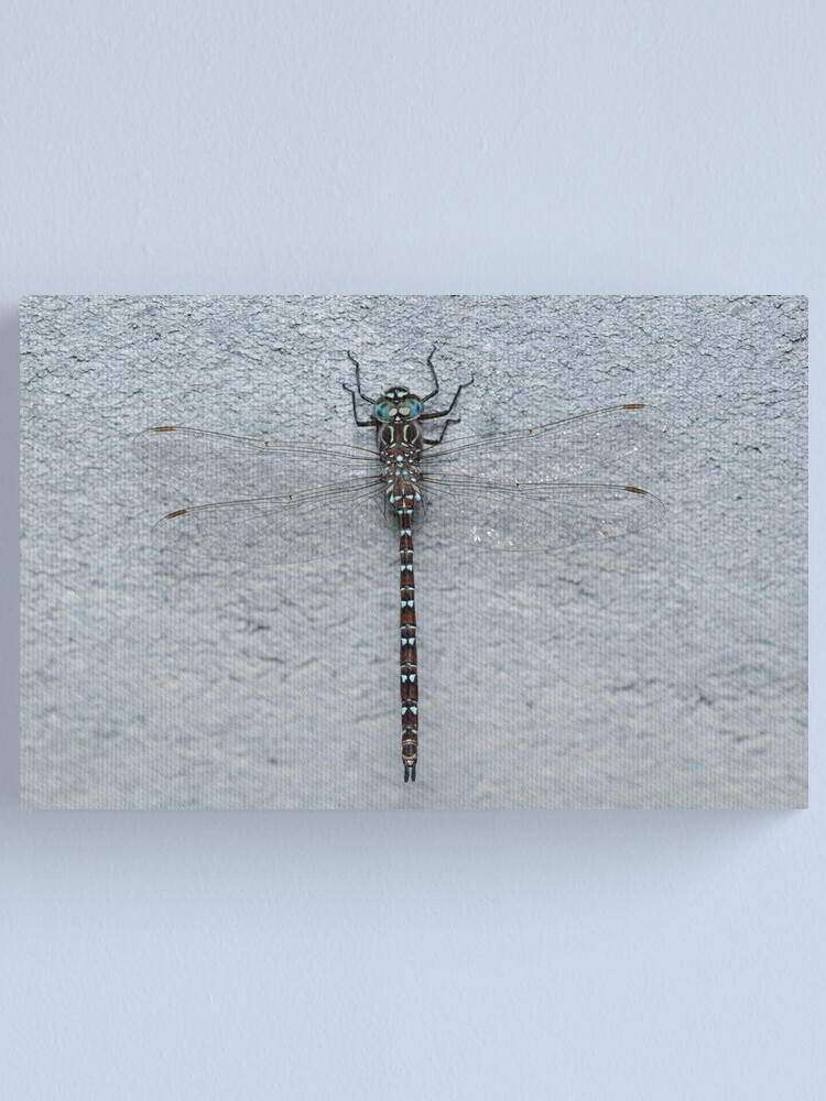 Alternate view of Unicorn Darner Dragonfly Canvas Print