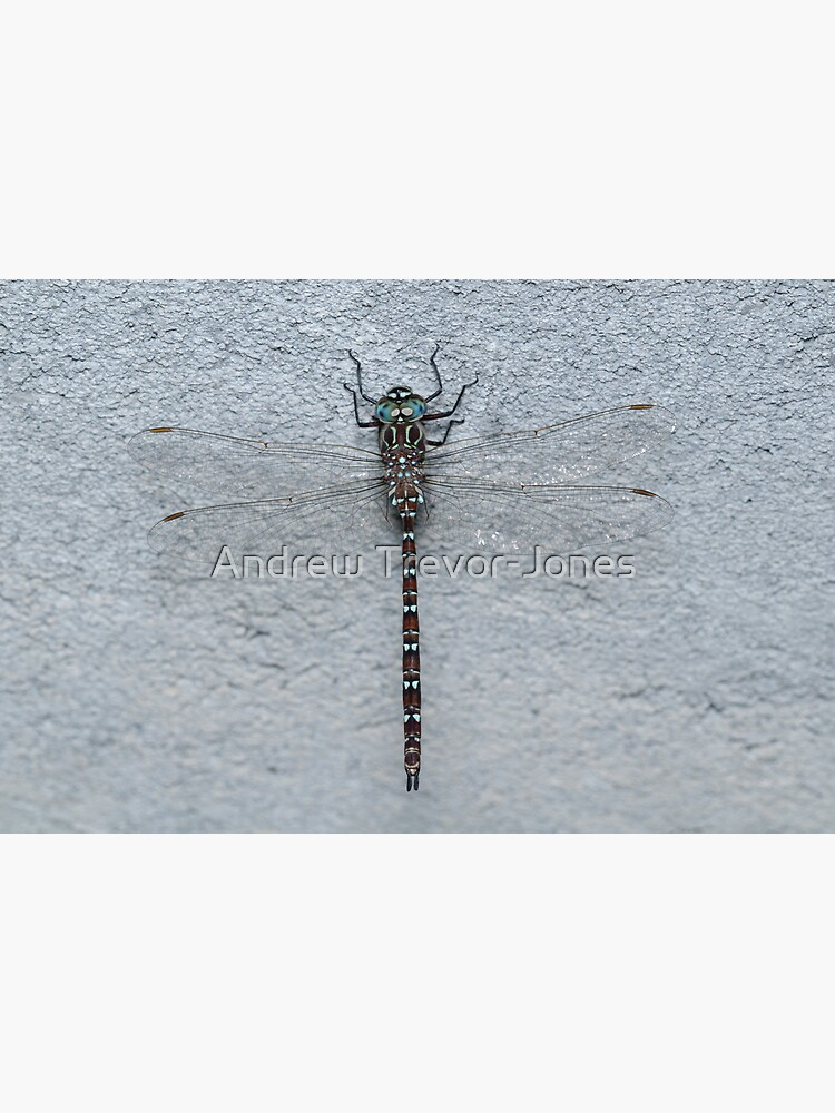 Unicorn Darner Dragonfly by andrewtj