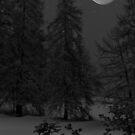 Moonlight by Steve plowman