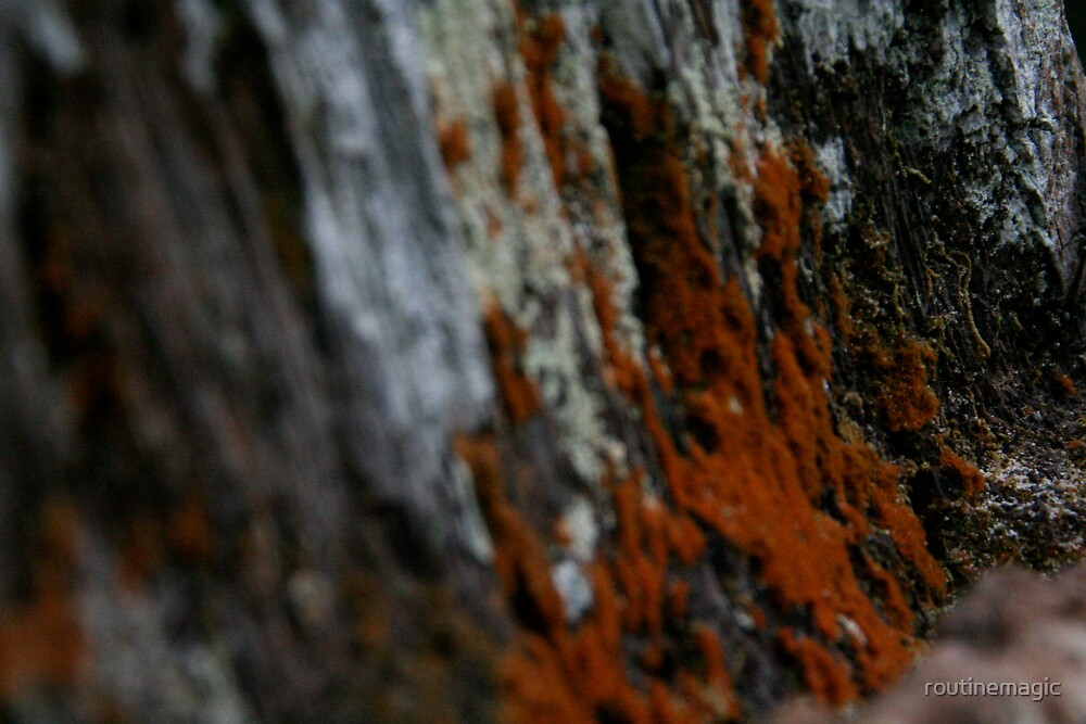 tree mold by routinemagic