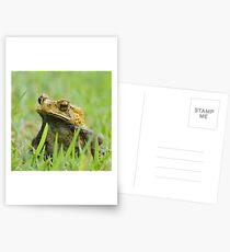 Froggy Postcards