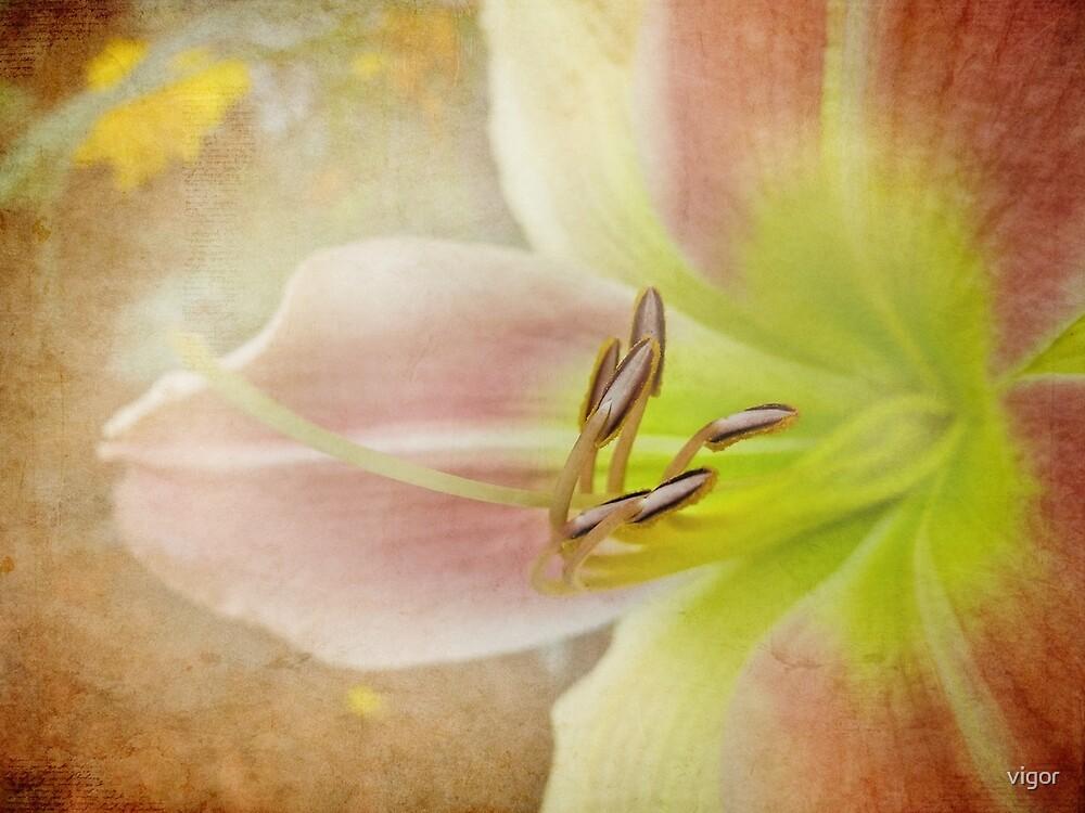 Lily Love by vigor