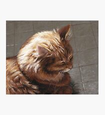 Cat Sleeping In Sunlight Drawing Photographic Print
