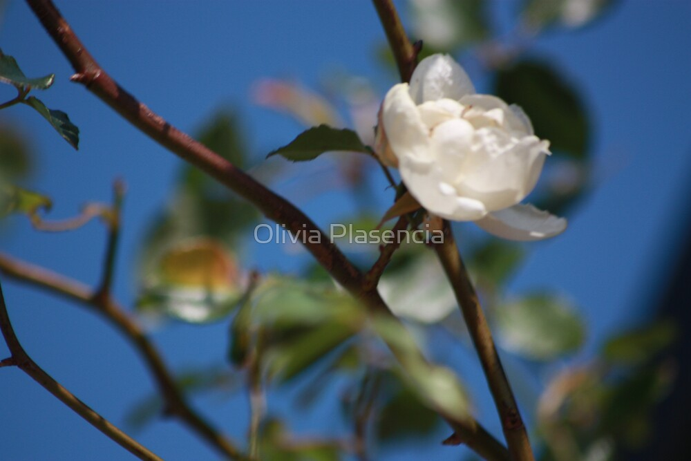 Hint of Spring by Olivia Plasencia