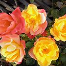 Roses by Shulie1