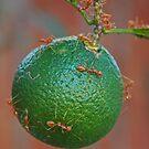 Ant Attack by jerry  alcantara