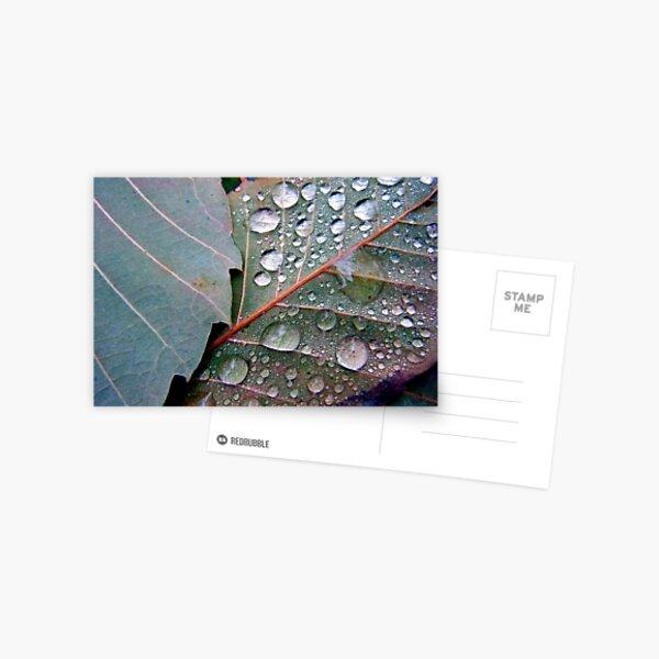 Leaf Dew Couple Postcard
