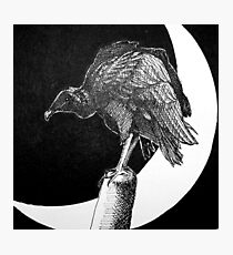 Black Vulture and Crescent Moon Photographic Print