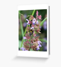 Sweet Nectar Greeting Card