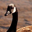 Got the Goose by Christianne Gerstner