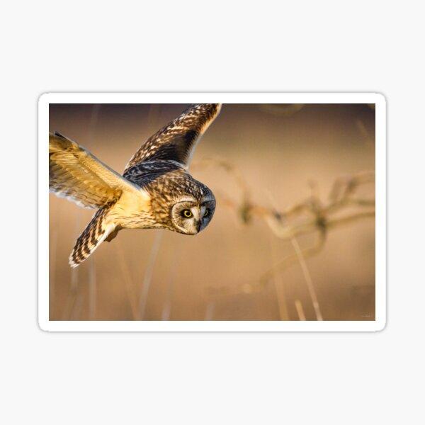 Motion Detected -- Short-eared Owl Sticker