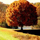 Autumn       ^ by ctheworld
