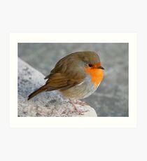 Plump robin Art Print