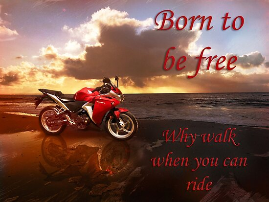 Born to be Free by JuliaKHarwood