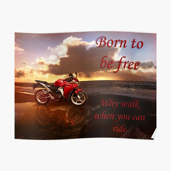 Born to be Free Poster
