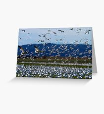 Snow Geese Twenty Four Greeting Card