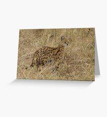 Serval, Serengeti National Park Greeting Card