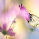 Fairy Light by JennyRainbow
