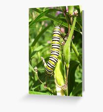 The Black Yellow & White Caterpillar Greeting Card