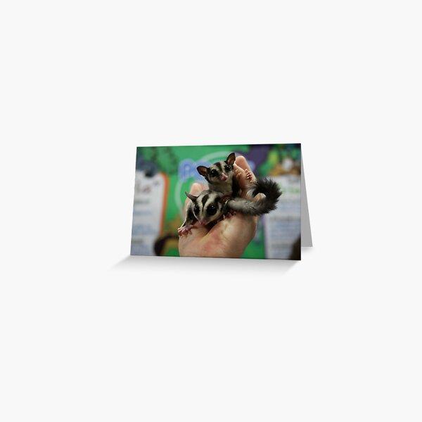 Sugar Gliders Greeting Card