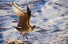 Taking off! by Eyal Nahmias