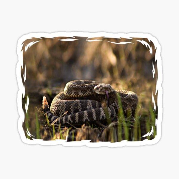 Rattlesnake Ready to Strike Sticker