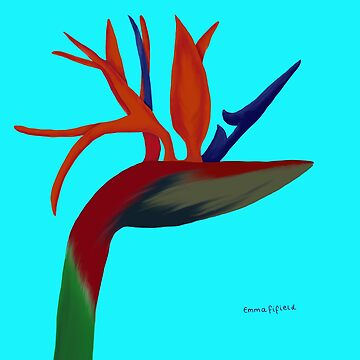 Bird of Paradise Flower by emmafifield