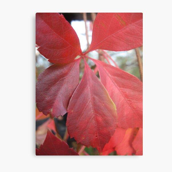 Leaf, red leaves Metal Print