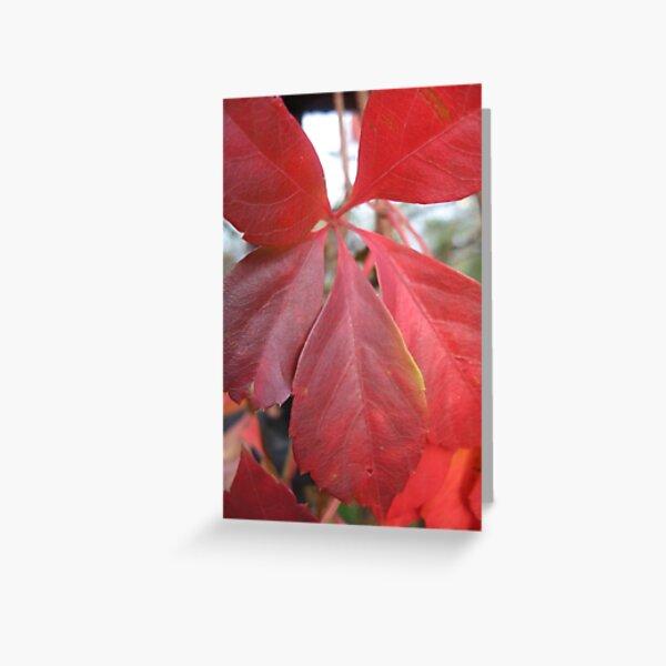 Leaf, red leaves Greeting Card