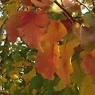 Autumn leaves by Ruth Varenica