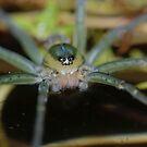 Fishing Spider by Andrew Trevor-Jones