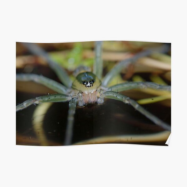 Fishing Spider Poster