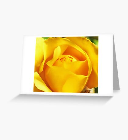 Mini Yellow Rose. Greeting Card