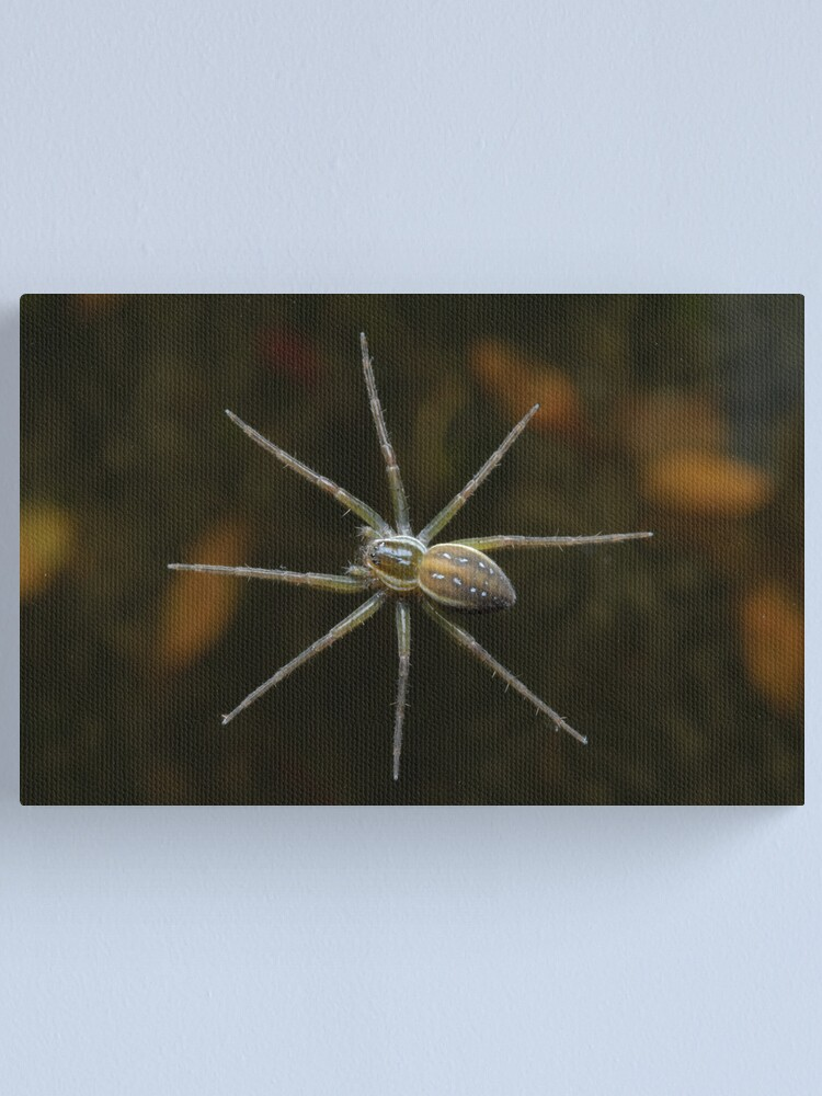 Alternate view of Fishing Spider Canvas Print