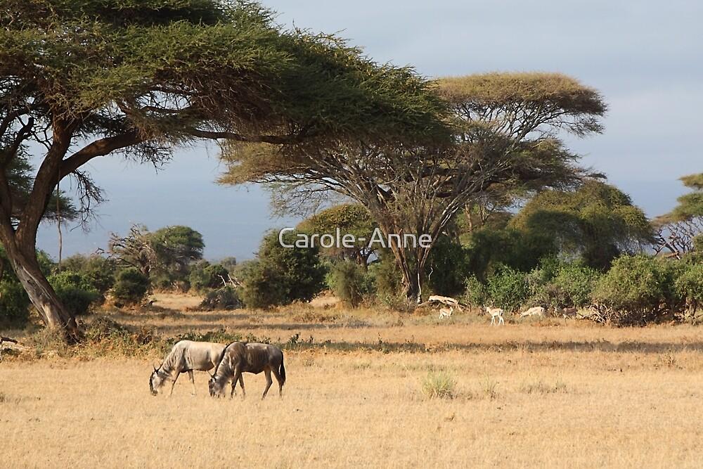 Wildebeest. White Race, Kenya.  by Carole-Anne