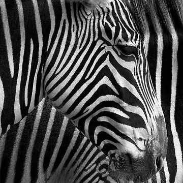 Black and white by gili