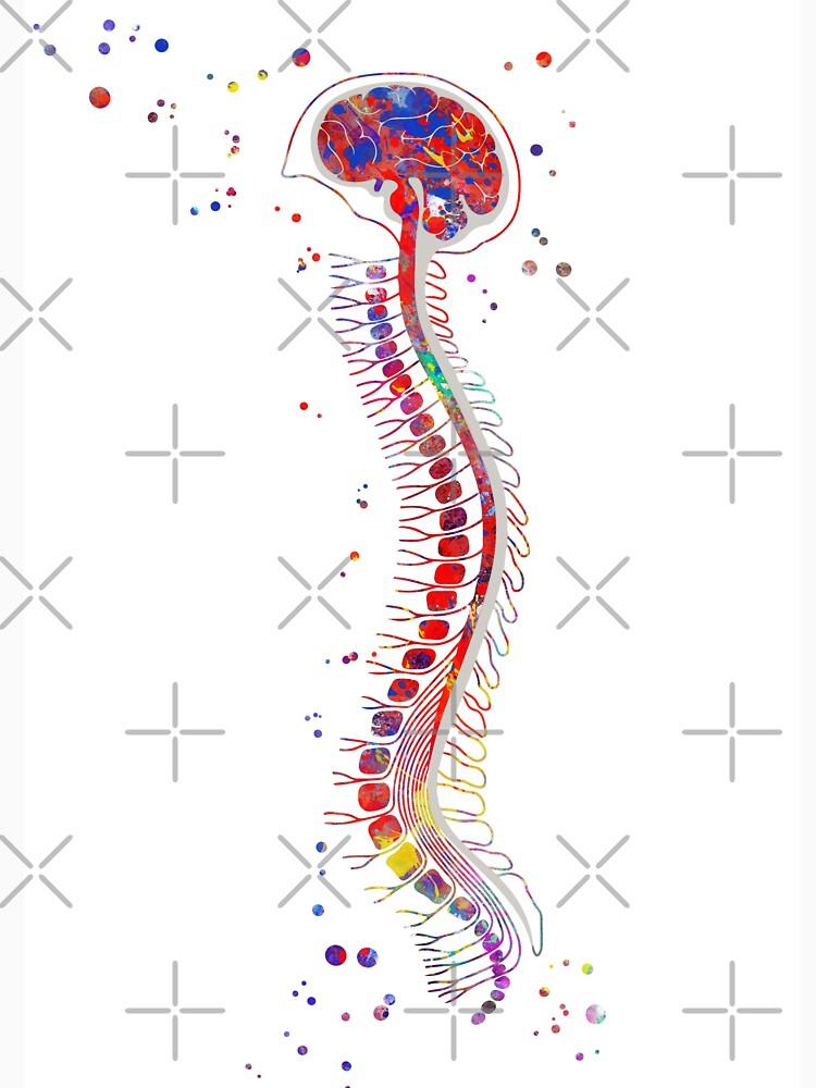 Famoso Anatomía Humana Camisetas Fotos - Imágenes de Anatomía Humana ...