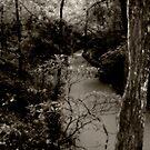 Peace Creek by SERENA Boedewig