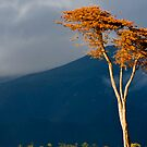 Against The Storm by Eyal Nahmias