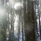 Sunrays  in the Falling Snow by Dawna Morton