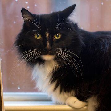 Jasper in the kitchen window by LynnStarner