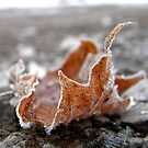 Frosted Leaf by Kait  Seidel